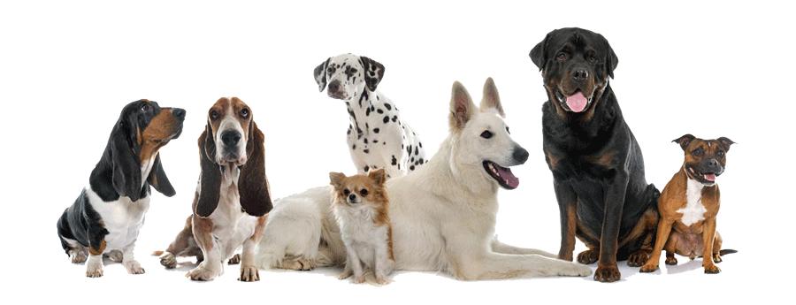 benebone-dogs-love