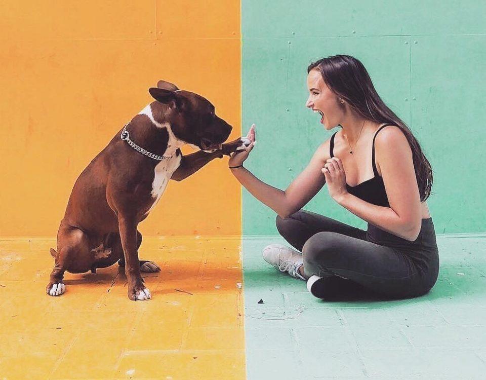 如何讓狗狗喜歡你