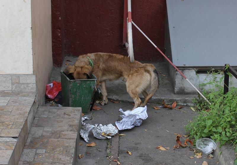 注意狗不能吃的東西