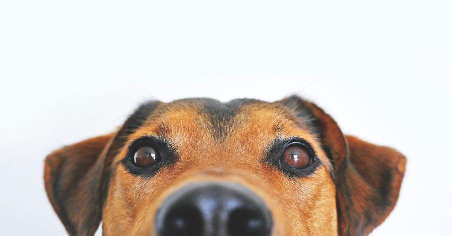 狗狗品種大全