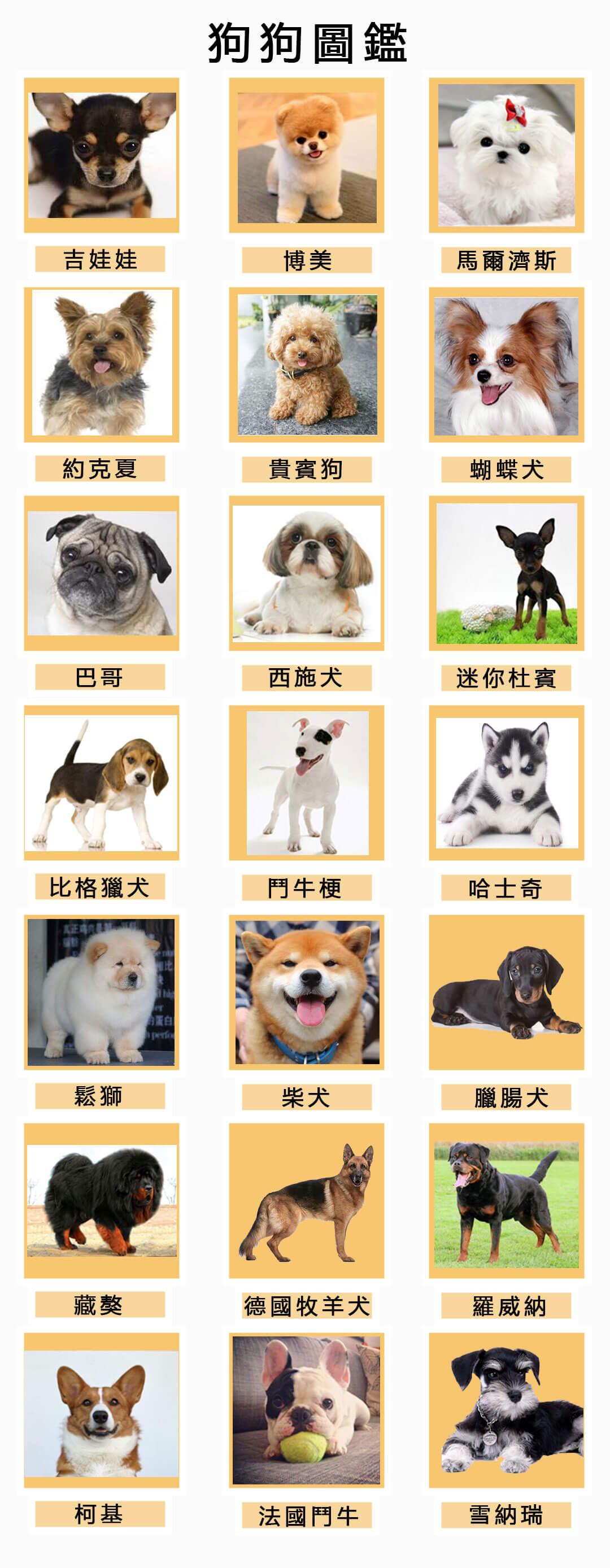 狗狗圖鑑-犬類圖鑑狗品種圖鑑